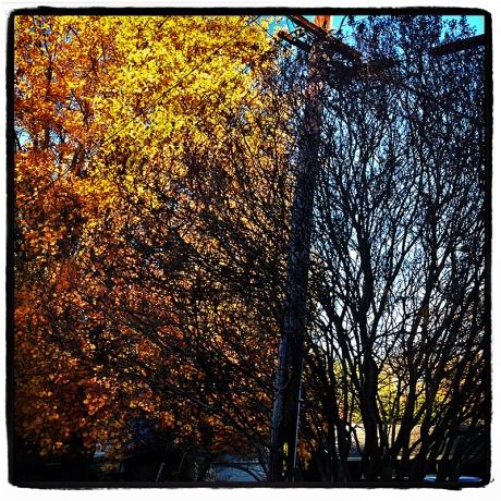 Dividing Light Blog iDiarist