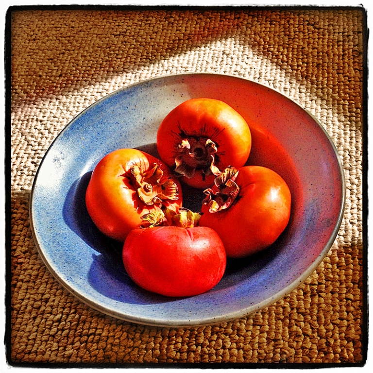 Four Persimmons Blog iDiarist