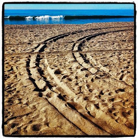 Tracks & Surf Blog iDiarist