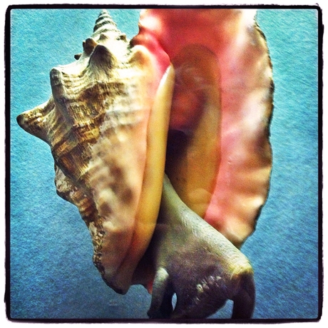 Conch Shell Blog iDiarist