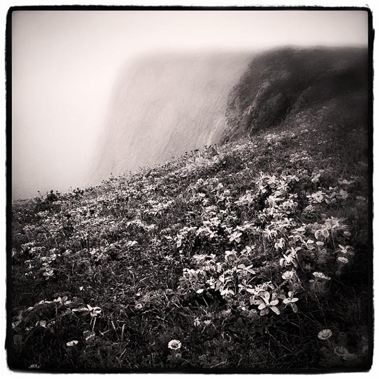Bodega Head #1 Blog iDiarist