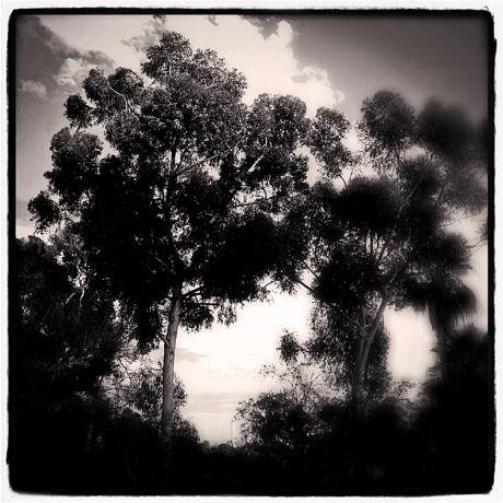 Eucalyptus Blog iDiarist