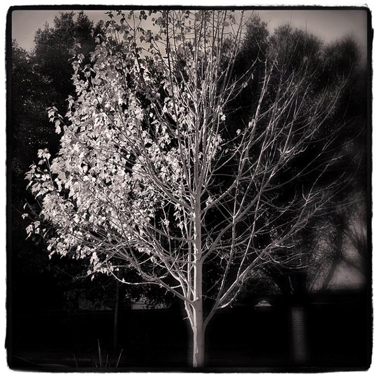 Fall Blog iDiarist