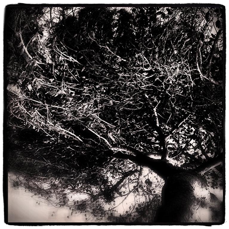 Meditation Tree Blog iDiarist