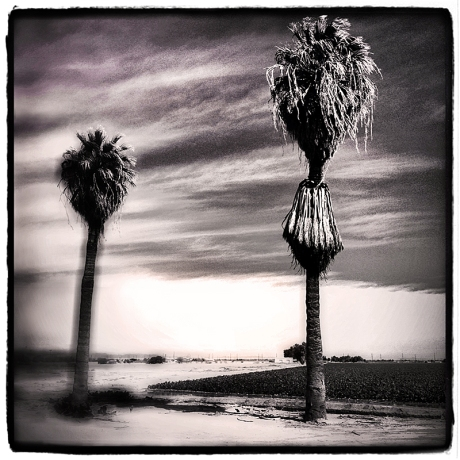 Palms of Brawley #2 Blog iDiarist
