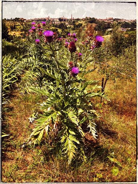Sienna & Blooming Artichoke Blog iDiarist