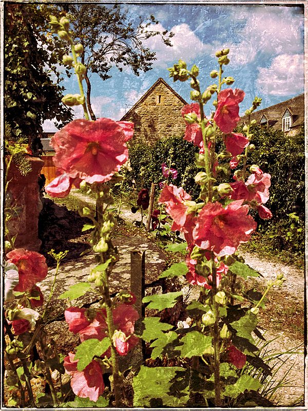 Hollyhocks in Chipping Campden Blog iDiarist