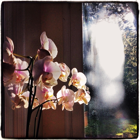 Mother's Day Orchids Blog iDiarist