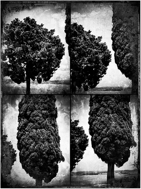 Trees of Tuscany X4 Blog iDiarist