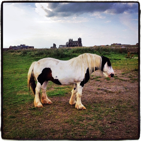 Clydesdale at Whitby Blog iDiarist