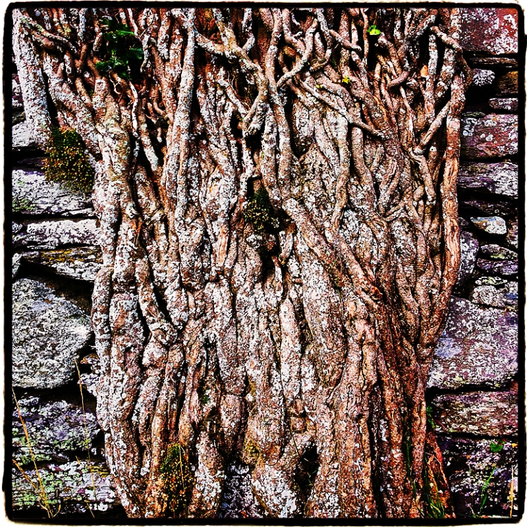 Roots & Stones Blog iDiarist
