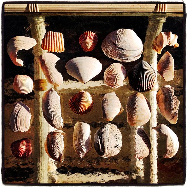 Shells #1 Blog iDiarist