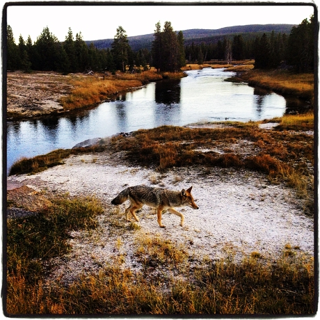 Coyote Blog iDiarist