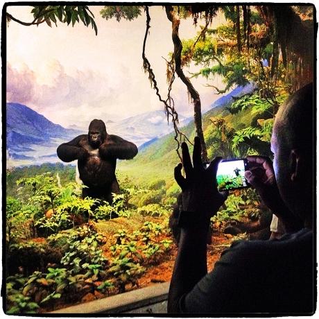 Photographing Gorilla Blog iDiarist