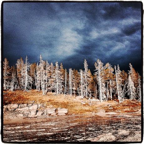 Thermal Trees iDiarist Blog