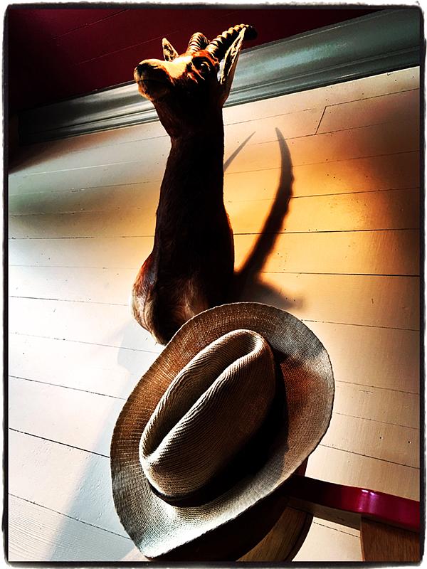 Cowboy Hat & Deer Blog iDiarist